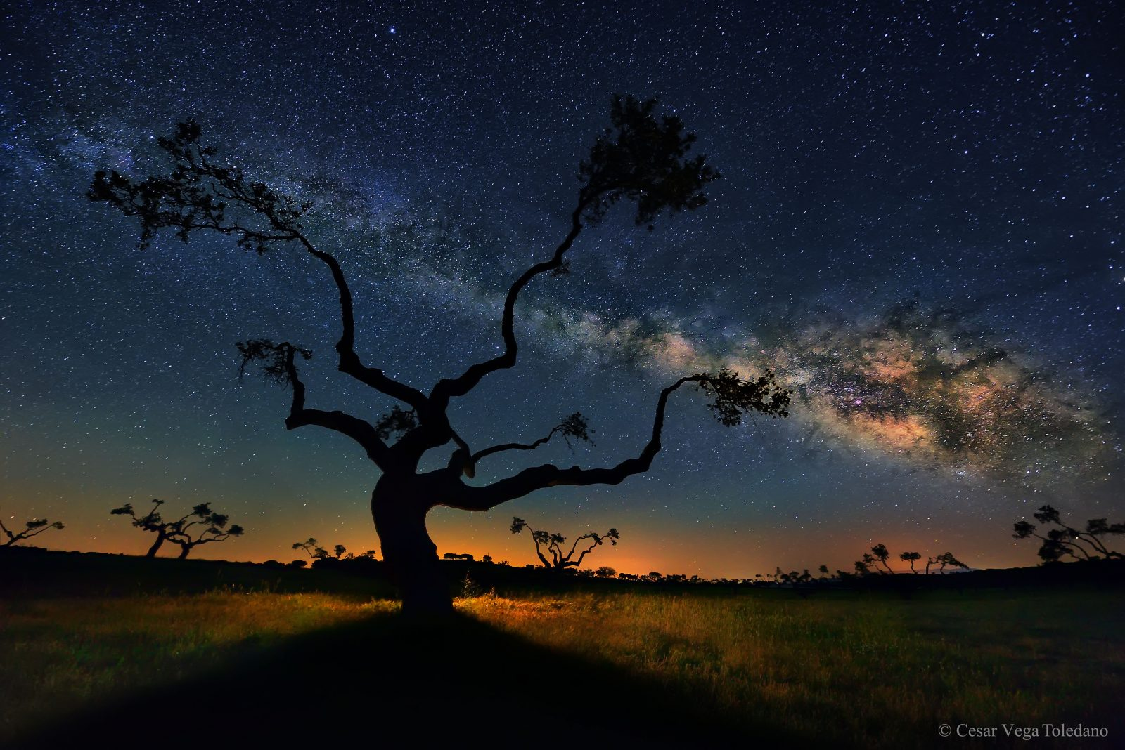 The Galaxy Tree